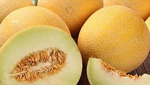 Плодови насаждения